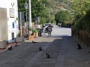Wizytę na wyspie kotów Salina